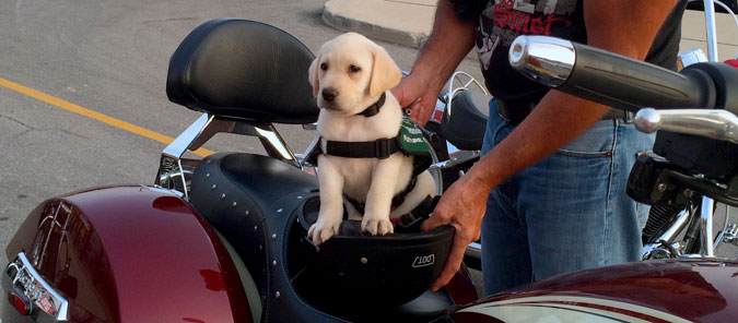 Ride for Dog Guides